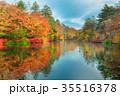 軽井沢雲場池紅葉 35516378