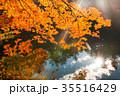 軽井沢雲場池紅葉 35516429