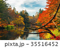 軽井沢雲場池紅葉 35516452