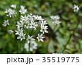植物 花 野菜の写真 35519775