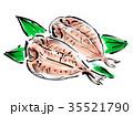 鯵の干物 鯵 干物のイラスト 35521790
