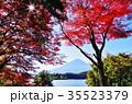 富士 富士山 河口湖の写真 35523379
