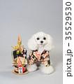 犬 門松 晴れ着の写真 35529530
