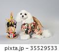 犬 門松 晴れ着の写真 35529533