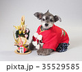 犬 門松 晴れ着の写真 35529585