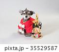 犬 門松 晴れ着の写真 35529587