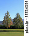 メタセコイア 樹木 秋の写真 35530356
