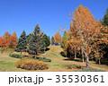 メタセコイア 樹木 秋の写真 35530361