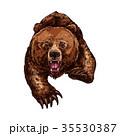 くま クマ 熊のイラスト 35530387