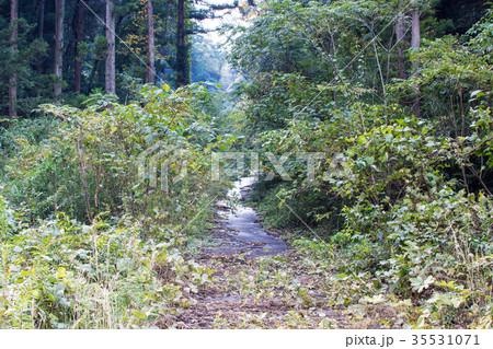 草木の繁る山道の写真素材 [35531071] - PIXTA