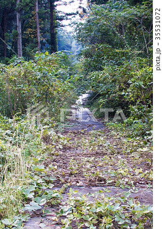 草木の繁る山道の写真素材 [35531072] - PIXTA