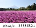 芝桜 花 春の写真 35536321