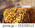 養蜂22 35539513