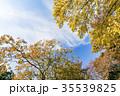 ナンキンハゼ 紅葉 葉の写真 35539825