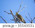 女性 メス 鳥が木にとまるの写真 35543531