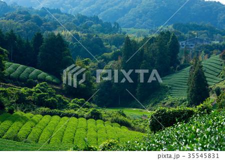 茶畑 35545831