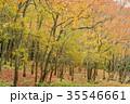 秋 紅葉 森の写真 35546661