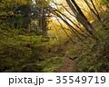 御岳山 自然 秋の写真 35549719