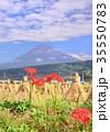 富士山 田んぼ 稲藁の写真 35550783