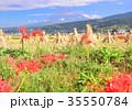 富士山 田んぼ 稲藁の写真 35550784