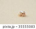 オカヤドカリ ヤドカリ ビーチの写真 35555083