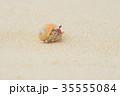 白砂ビーチのオカヤドカリ 35555084