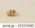 白砂ビーチのオカヤドカリ 35555085