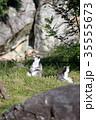 ワオキツネザル キツネザル 猿の写真 35555673