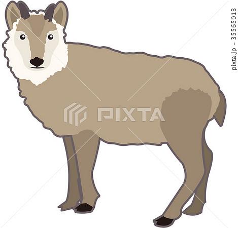 ニホンカモシカのイラスト素材 35565013 Pixta