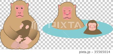 japanese monkey, animal, animals 35565014