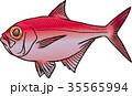 魚 海水魚 魚類のイラスト 35565994