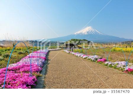 春の暖かい芝桜の風景と富士山 35567470