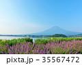 富士山 夏 ラベンダーの写真 35567472