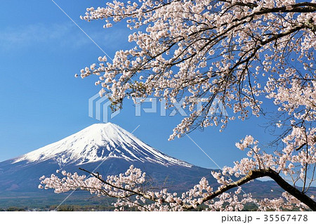 Mt,Fuji&Sakura 35567478