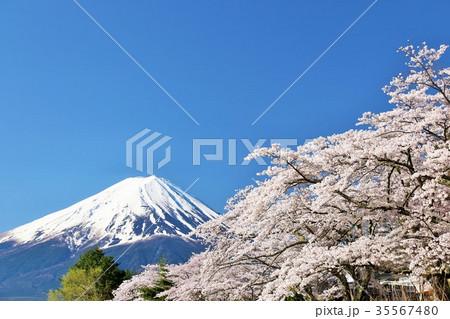 春の彩り 富士山と桜 35567480