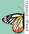 Butterfly Icon Vector 35569512