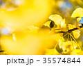 黄金のイチョウ 35574844