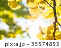 黄金のイチョウ 35574853