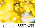 黄金のイチョウ 35574855
