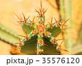 Green cactus drows 35576120