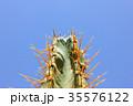 Green cactus drows 35576122