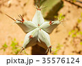 Green cactus drows 35576124