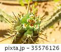 Green cactus drows 35576126