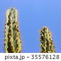 Green cactus drows 35576128