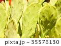 Green cactus drows 35576130