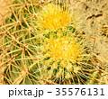 Green cactus drows 35576131