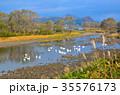大仙市 白鳥 鶯野の写真 35576173