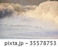 タンチョウ 丹頂鶴 霧の写真 35578753