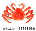 タラバガニ 水彩画 イラストのイラスト 35583939