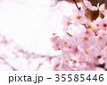 桜 花 春の写真 35585446